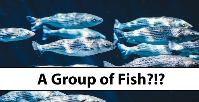 How to call a Group of Fish?