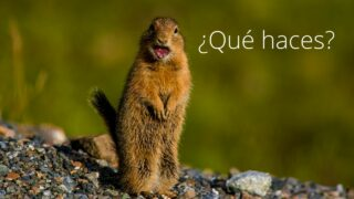 The Meaning of ¿Qué haces