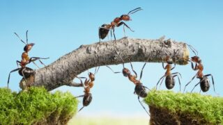 The Spiritual Meaning of Ants